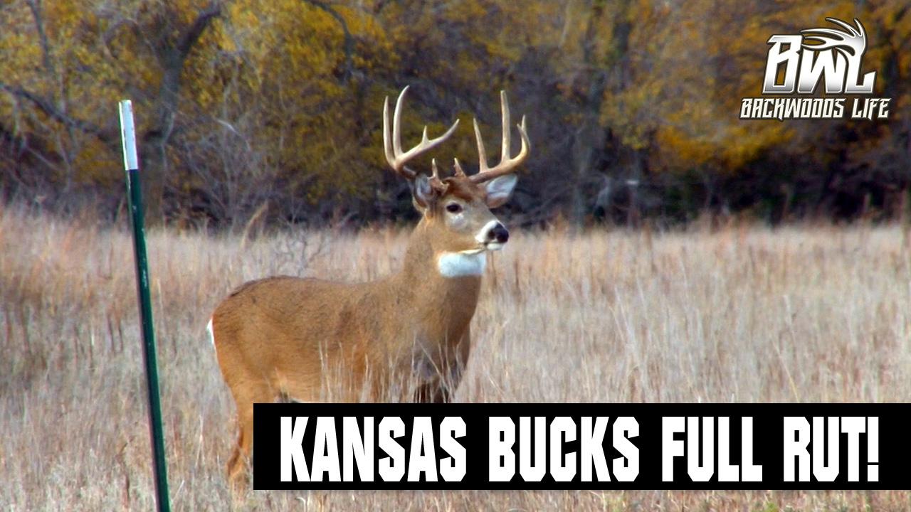 Kansas Bucks