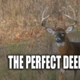 Perfect Deer Hunt