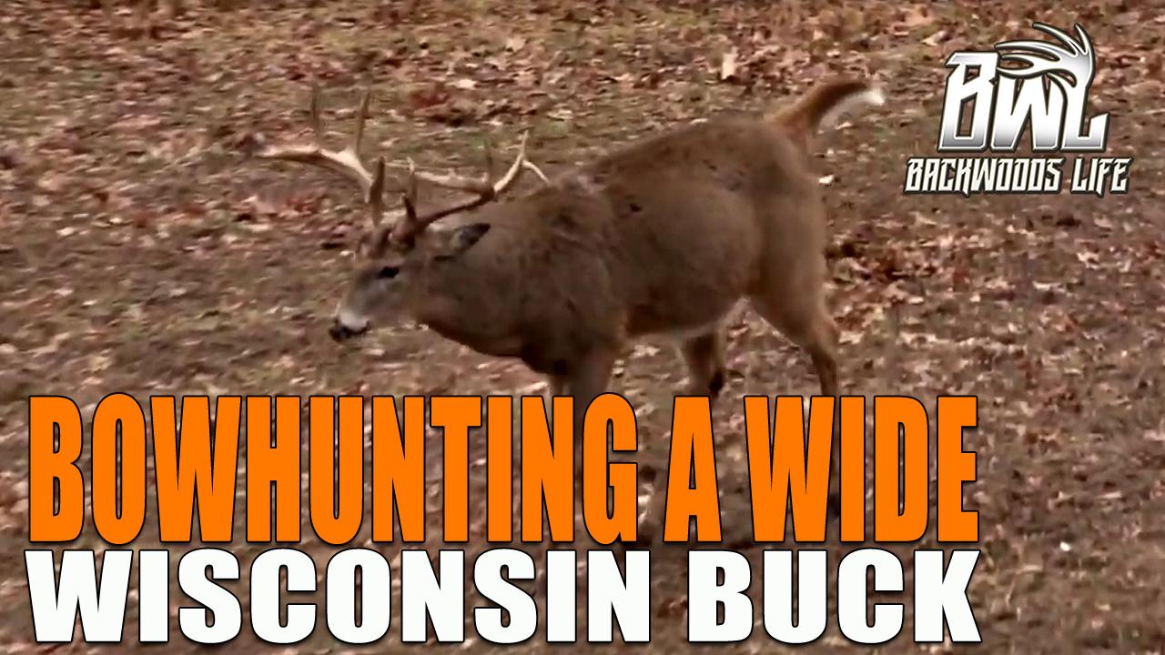 Wisconsin Bow Buck